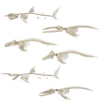 Sharks and Whales Skeletons 6 in 1