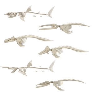 3D whale skeleton shark model