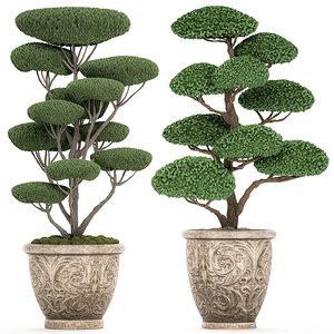topiar tree classic flowerpots model