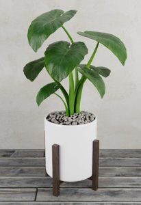 plant alocasia 3D