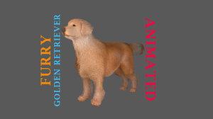 3D golden retriever furry animations model