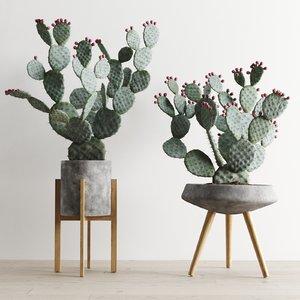 opuntia cactus planter 3D model