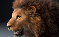 African Lion Hair Fur Rigged