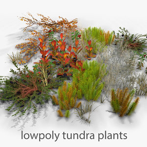 3D tundra plants moss grass model