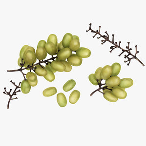 green grapes model