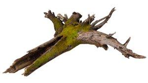 3D tree root model