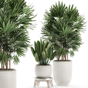 3D decorative plants interior white model