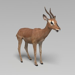 3D model impala modeled rigged animation