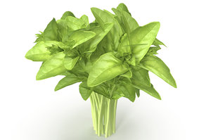 cinnamon basil 3D model