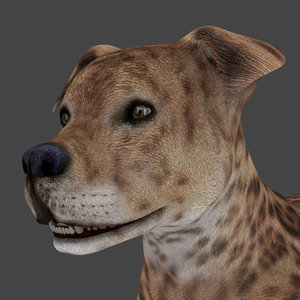 dog rigged 3D
