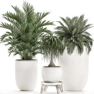 decorative plants interior white 3D model