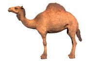 Camel Hair Fur Rigged