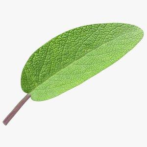 3D realistic sage leaf