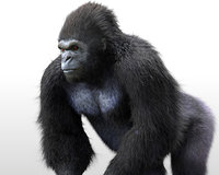 Gorilla Rigged Hair Fur