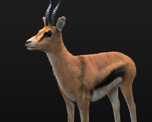 deer wildebeest model