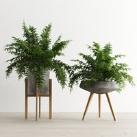 Fern In Concrete Pots