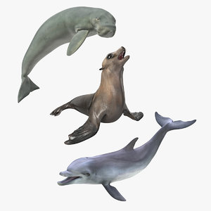 marine mammals rigged 3D model