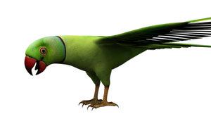 green parrot bird 3D model