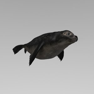 seal animation rigging 3D model