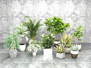 3D indoor pot plant agava