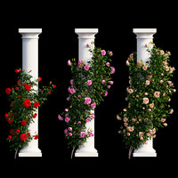 Rose plant set 10