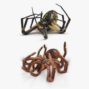 dead spiders 3D model
