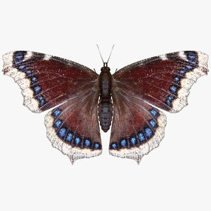 realistic mourning cloak 3D model