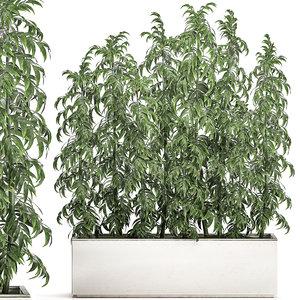 ornamental bamboo tree white model