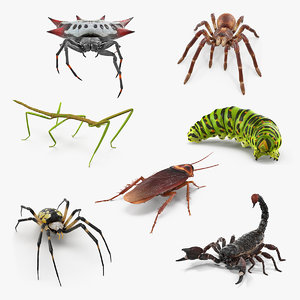 3D creeping insects