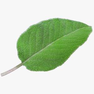 3D realistic sage leaf 02