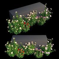 Rose plant set 11