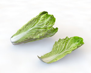 3D lettuce model