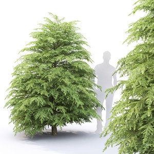 tsuga canadensis tree 3D model