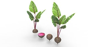 3D beet root beetroot