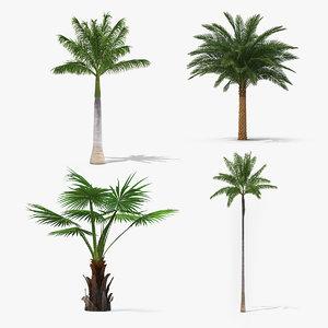 3D palms roystonea regia