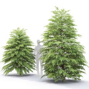 3D model tsuga canadensis trees 2