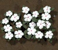 Ground Flower White Vinca
