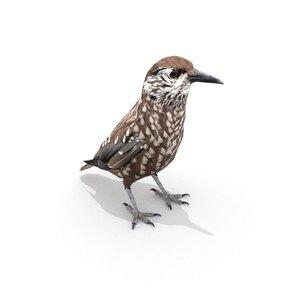 3D eurasian nutcracker bird model