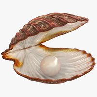 Clam Shell with Pearl