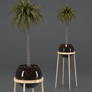 indoor plant dracaena glass 3D model