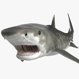 tiger shark rigged modo 3D model