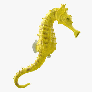 slender seahorse hippocampus reidi 3D