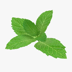 fresh mint leaves 3D model