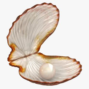 3D clam shell pearl animation model