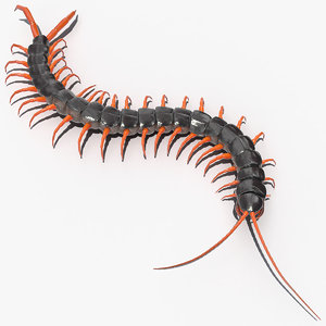 scolopendra subspinipes crawling 3D model