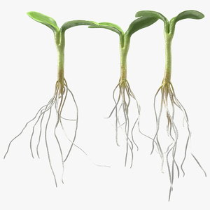 3D sprout roots set model
