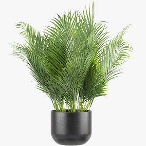 3D areca palm