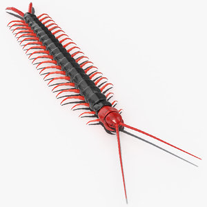 scolopendra subspinipes mutilans model
