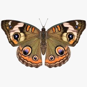 3D realistic common buckeye model