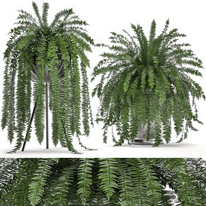 decorative white pot fern 3D model